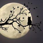 猫と月のシルエット