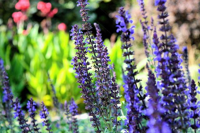 ブルーの野草