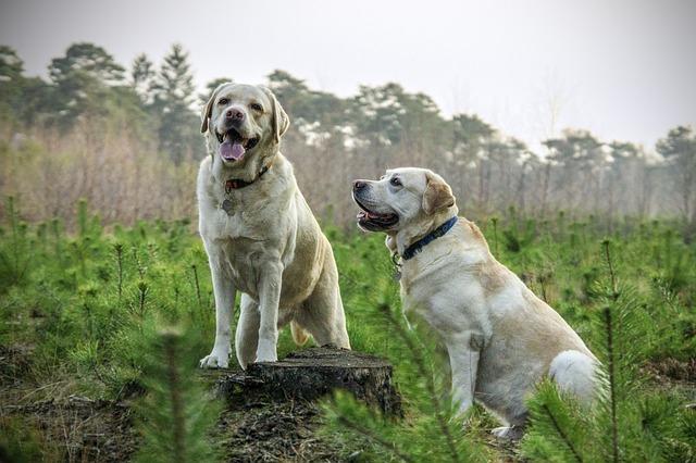 2匹の白い犬