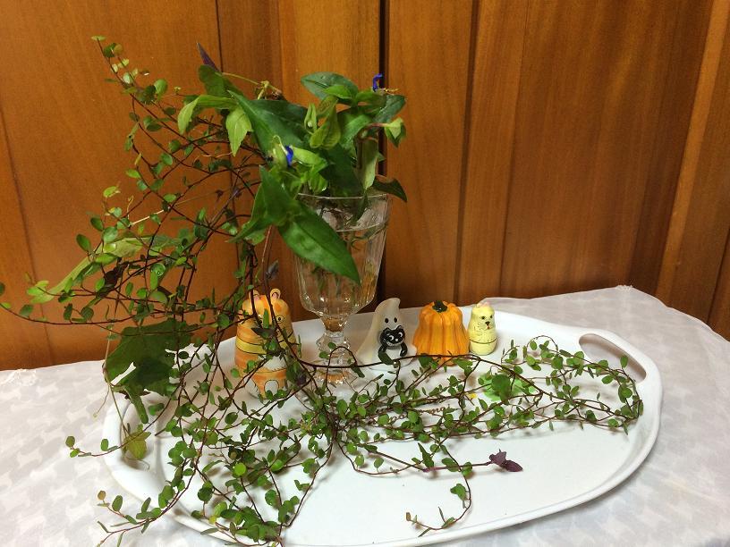 プミラとつゆ草のハロウィンアレンジ