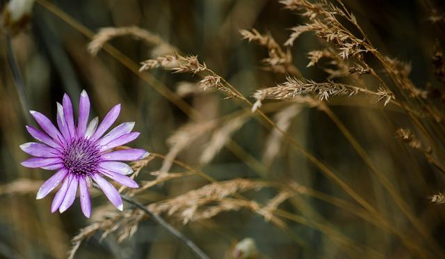 野原のブルーの花