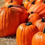 でかでかかぼちゃ