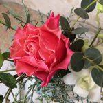 大きいオレンジのバラ
