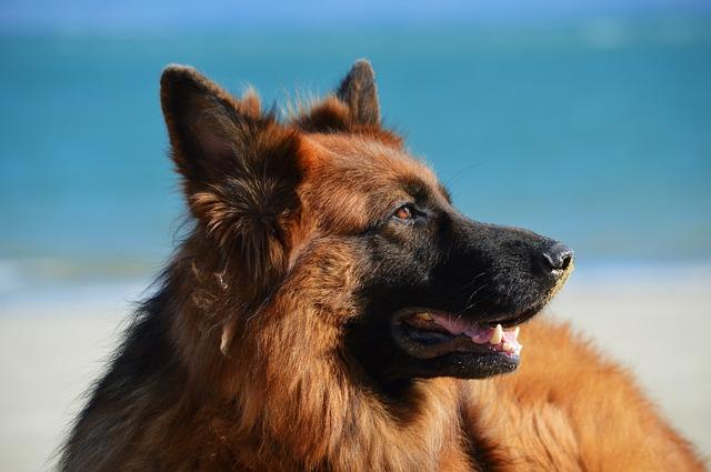 ポンちゃんに似た犬