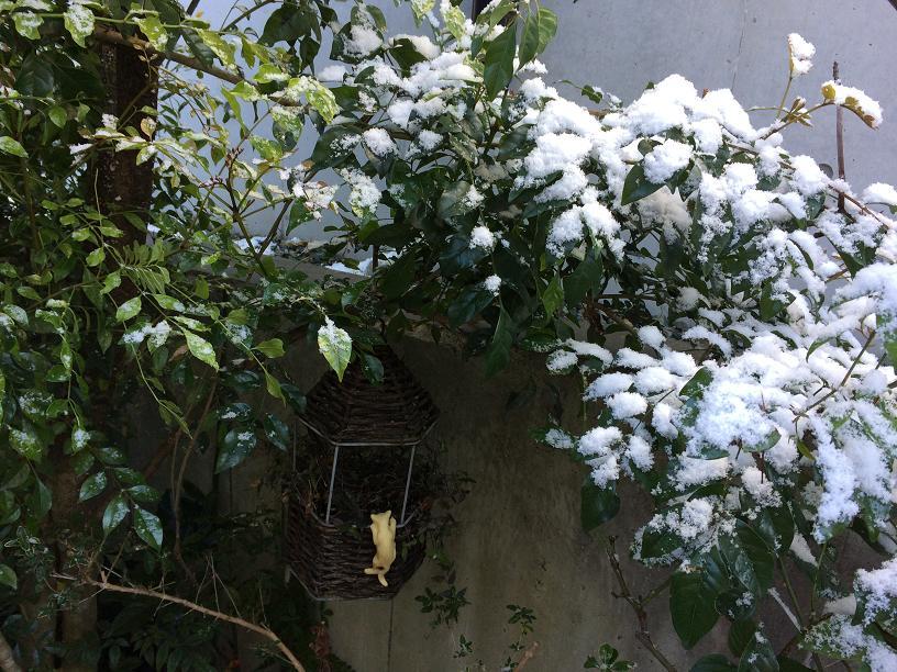 雪のねこさん