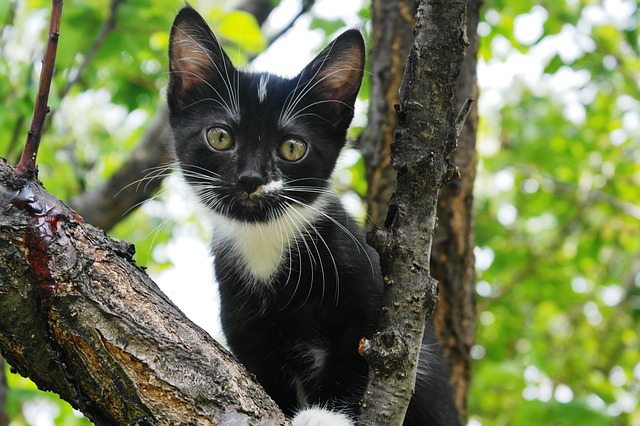 木に登った黒ネコちゃん