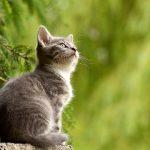 景色を見る猫