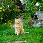 野原を散歩する猫ちゃん