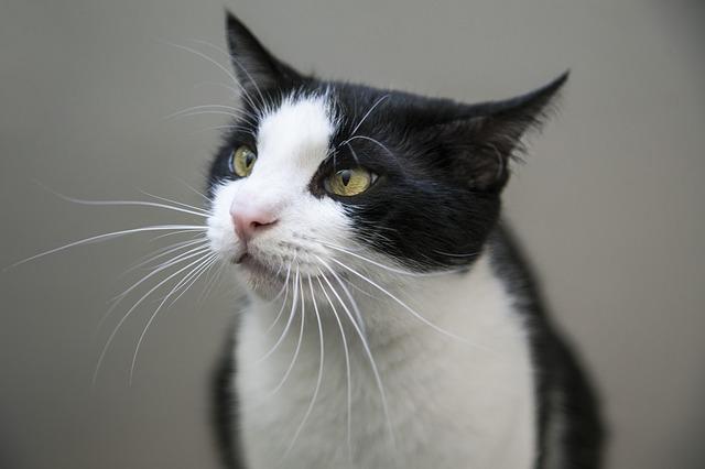 白黒猫ちゃん