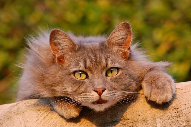 獲物を狙っている猫ちゃん
