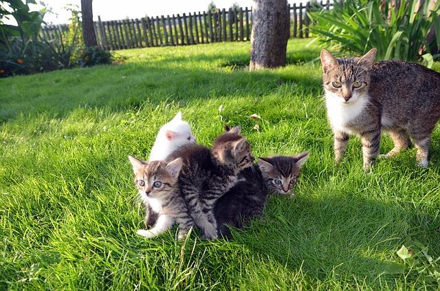 庭で遊べ猫たち