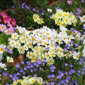春のお花たち