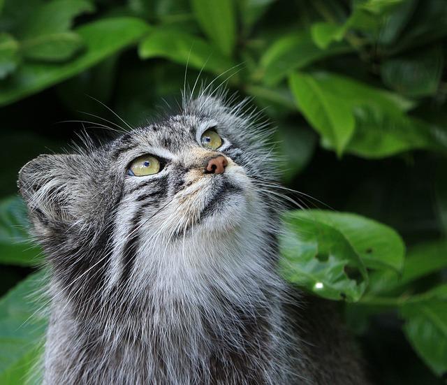 リーダー猫