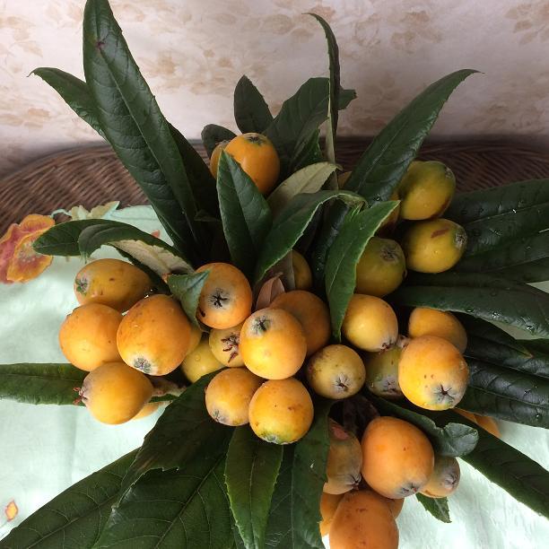 上から見たビワのアレンジ