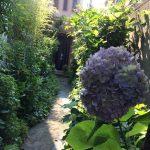 あじさいと庭の小道