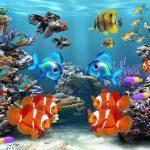 海の熱帯魚