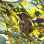 木に止まる雀