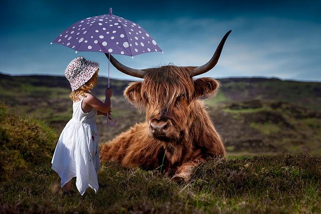 牛と女の子
