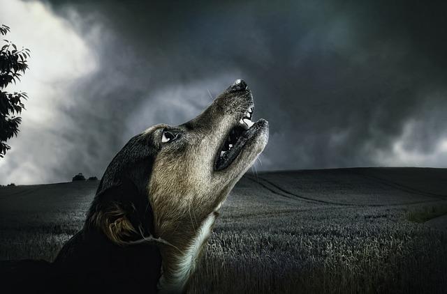 犬の遠吠え