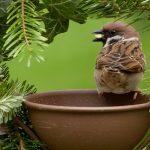 雀の餌入れ