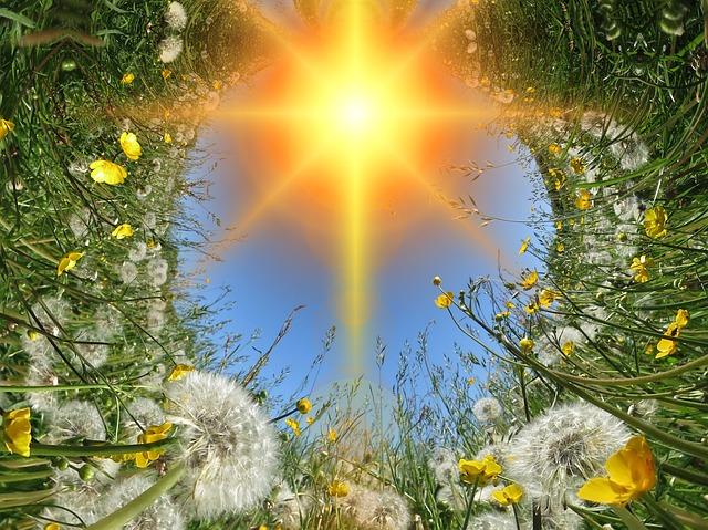 タンポポと太陽