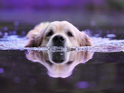 泳ぎの上手いわんちゃん