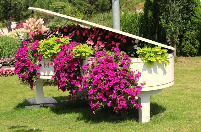 ペチュニアとピアノ