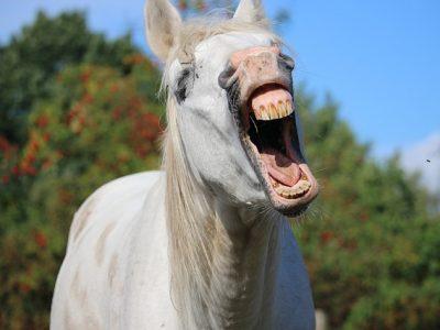 あくびする馬