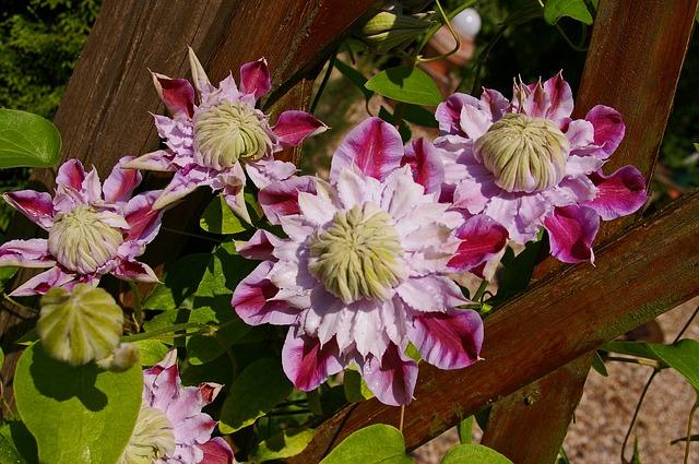 ピンク系2色の花びら