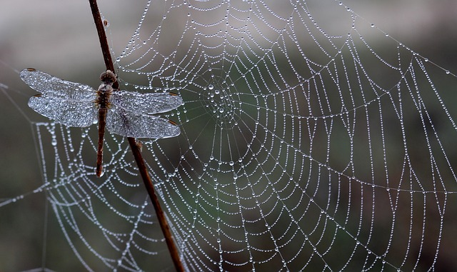 クモの巣とトンボ