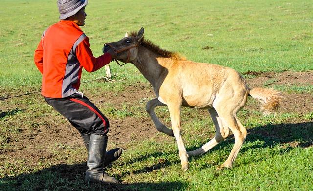 噛み付く馬