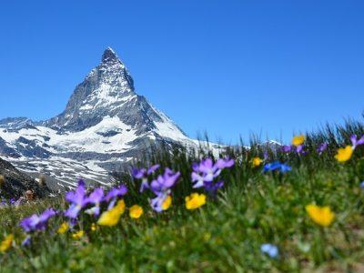 高い山と高山植物