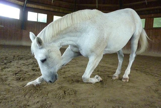 馬のおじぎ