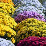 ポットマムの花工場