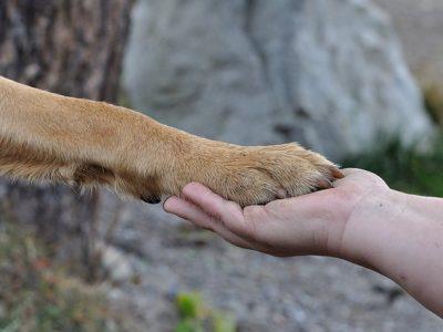 飼い主と握手