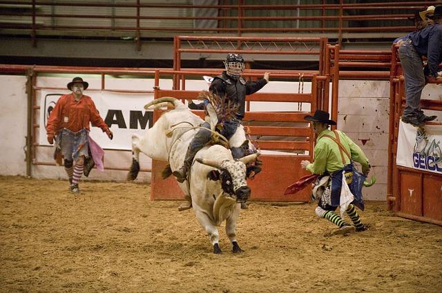 牛のロデオ