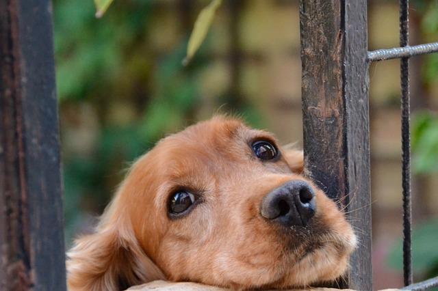 たそがれている犬